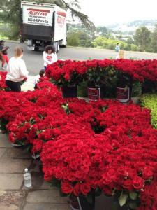 25 Ιουνίου 2013, Μάικλ Τζάκσον θαυμαστές, στόχος τα 13.000 τριαντάφυλλα στη Νέβερλαντ και στο κοιμητήριο