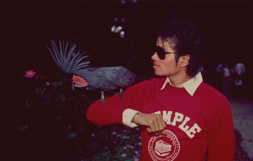 Michael Jackson with bird