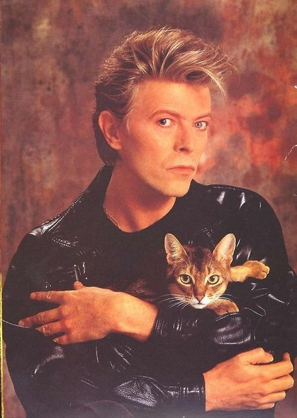 bowie-cat-people-500